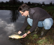 French mirror carp with Hongarian bloed, added in january 2012.